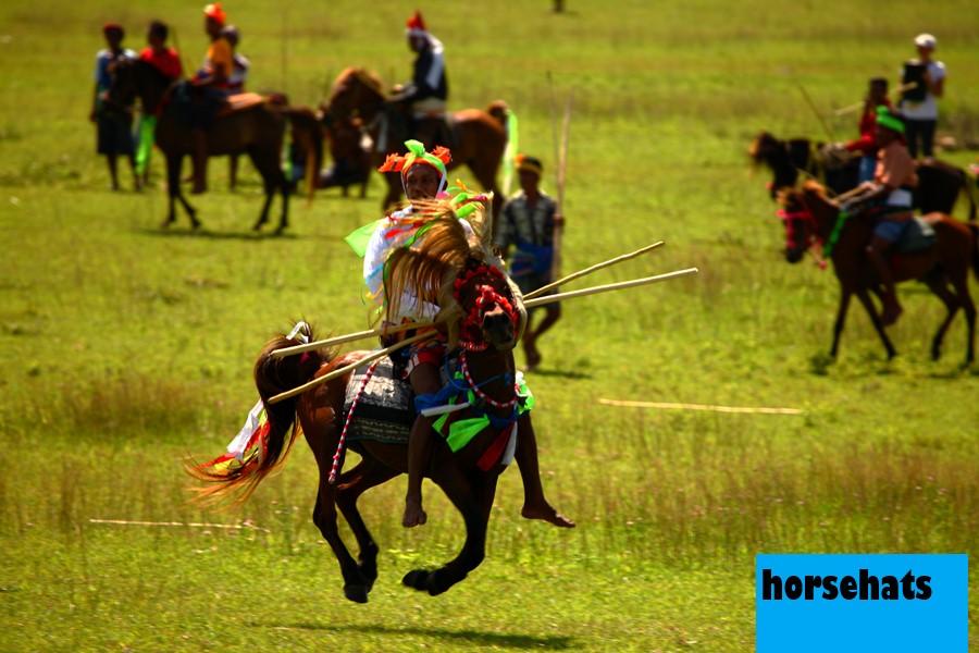 Kuda Sumba, Warisan Alam Tanah Marapu yang Semakin Menghilang