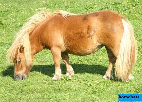 Mengenal Lebih Dalam Tentang Kuda Poni